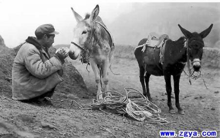 图农耕的毛驴美女骑驴图片