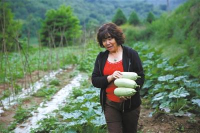 老知青傅和平在菜地里摘下成熟的西葫芦准备晚上食用。这里的东西基本都是自给自足,很少去市场上购买。